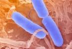 Infectology, Paediatrics and Autoimmune